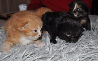 Gut gefüllte Kittenstube – S – Wurf wurde geboren